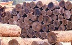 揭秘:康辉地板高品质实木地暖地板平度